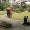 桜をめぐる旅。花見は瀬戸内海がお薦め!