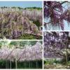 紫の時代に描かれた源氏物語と枕草子